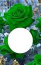 Pascaline et roses vertes