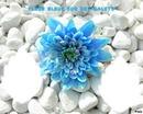 fleur bleue sur des galets
