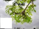 Branche avec feuilles