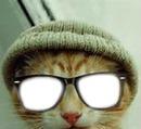 chat à lunettes