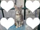 le chat de la amour