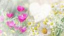 Fleur 58