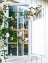 Fenêtre avec roses