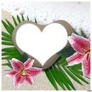 coeur des iles