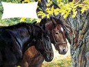 2 chevaux 1 photo