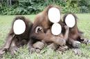 singe famille