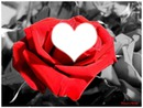 rose rouge velour