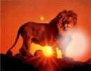 Leão Amanhecer