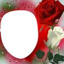 renewilly rosas blanca y roja