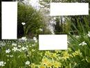 Printemps-Bois fleuri -springtime