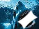 ataque de tiburon