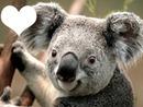 Koala Enamorado