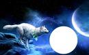Бял Вълк и Луна