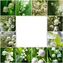 fleurs 1er mai