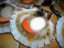 coquille!