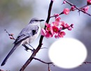 Oiseau-branche-fleurs