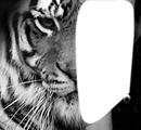 Mi tigre , Mi humain !