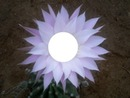 flor lila hermosa