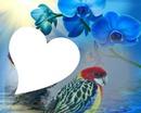 Mon coeur et pérroquet