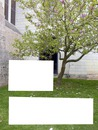 Spring-Printemps sous l'arbre en fleurs