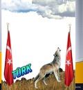 türk bozkurt.