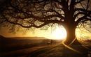 arbre et soleil couchant