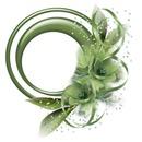 Elegante verde
