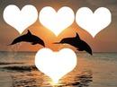 dauphin coucher de soleil