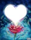 rose rouge + coeur