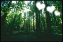 Floresta Twilight