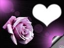 Je t'aime avec Rose