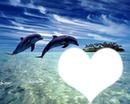 coeur du dauphin