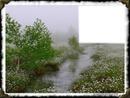 Paysage et ruisseau