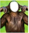 Rosto De Macaco