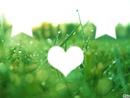 Etoiles + Coeur = Herbe (Vive l'imagination XD)