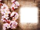 Bois-fleurs de pommier