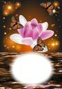 Fleur-papillons-nature