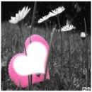 ♥ rose sur herbe