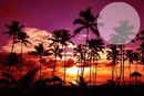 Vc nas palmeiras