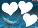 dauphin de coeur