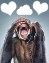 le singe rigolo