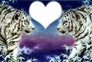 amour des tigres