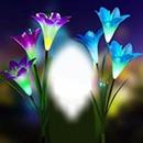Cc flores fosforentes