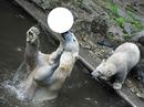 jeu d'ours