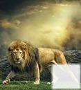 tu leon