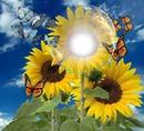 entre girasoles y mariposas