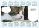 calendrier chats 2014