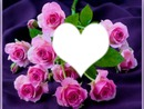 la plus belle des fleurs