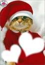 Chaton Noel...