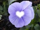 flor con tu foto